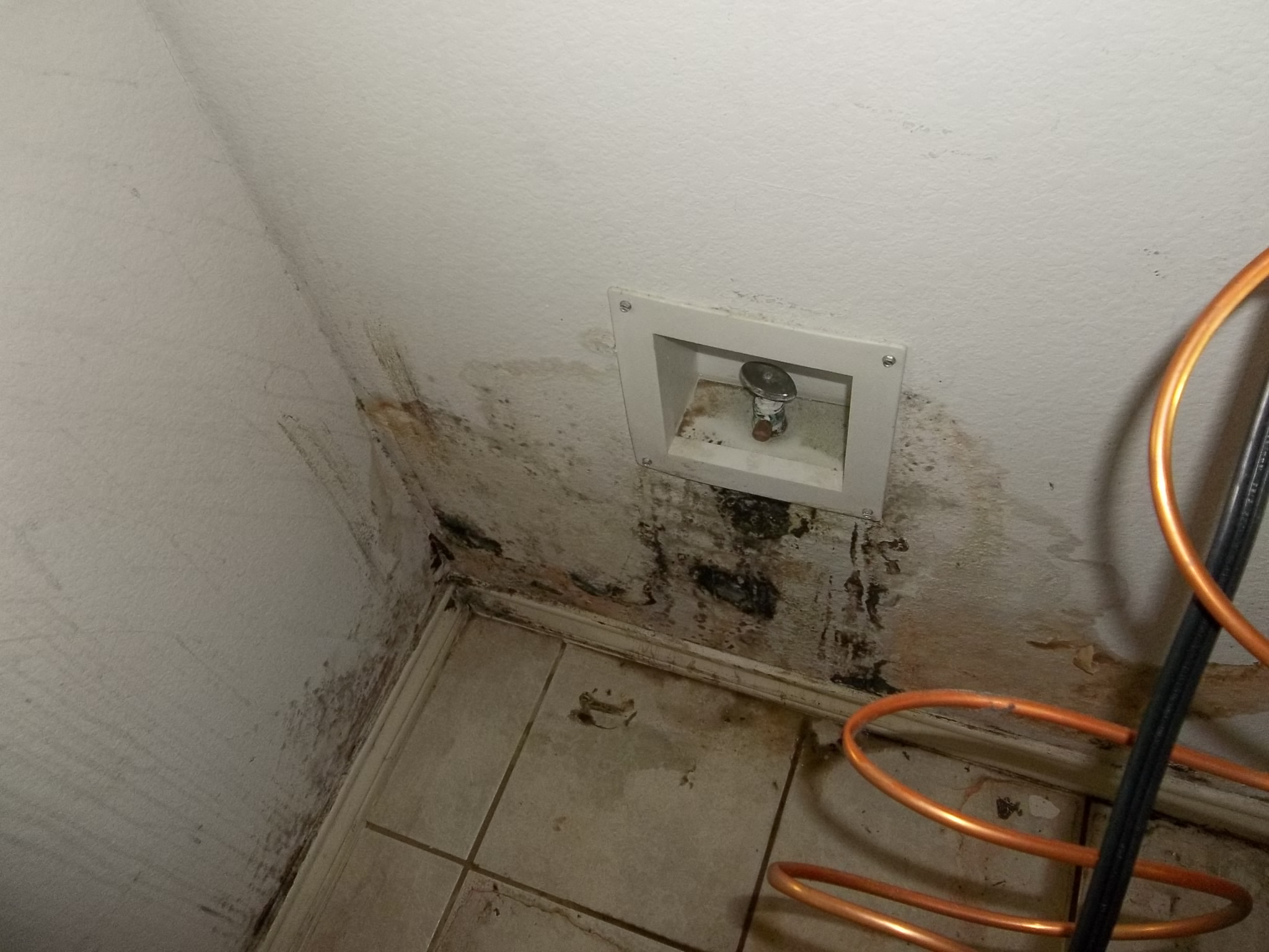 how to find the source of mold in your home