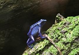 Omaha Zoo: Frog