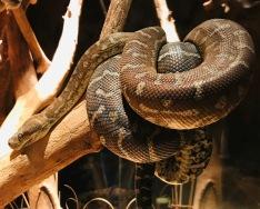Omaha Zoo: Snake