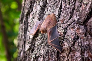 Bat on a tree